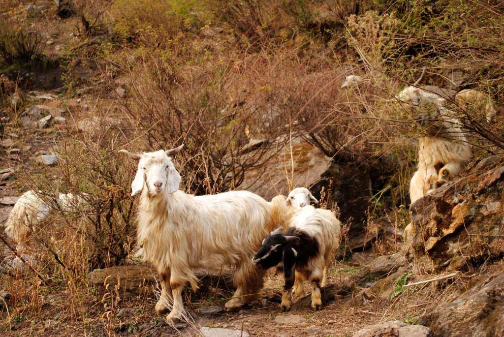 Tosh Himachal Pradesh