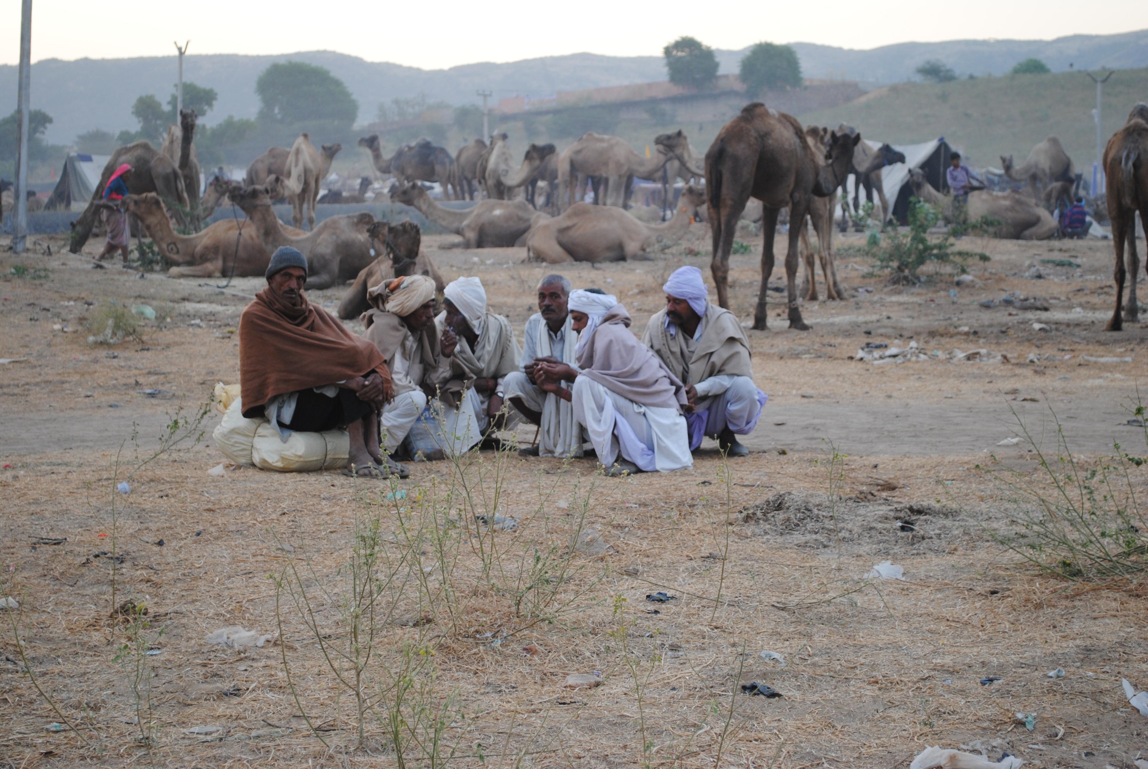 Pushkar Fair camel traders