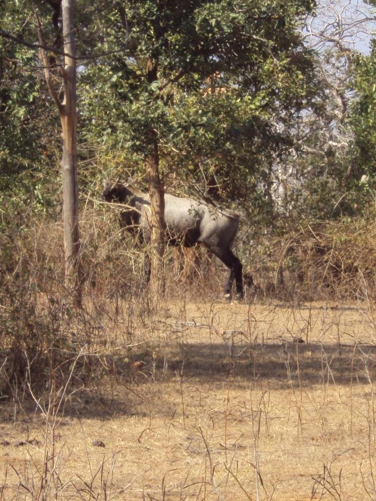 Ken Ghariyal Sanctuary Khajuraho